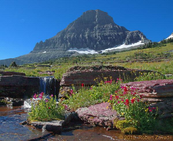 Photo Of Alpine Garden In Glacier National Park