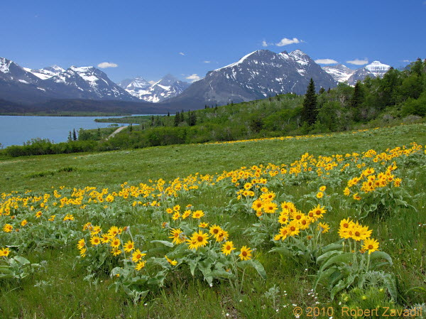 St Mary Spring in Glacier National Park